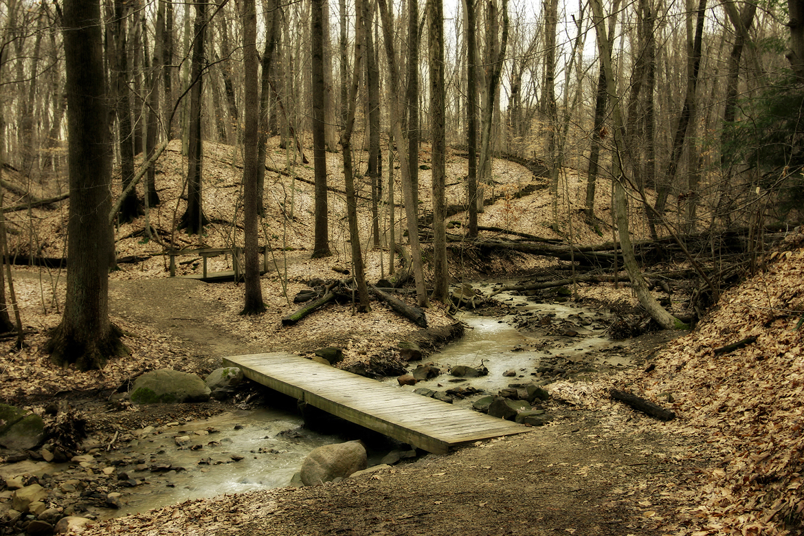 Mystic Woodland Series – Current Exhibitions