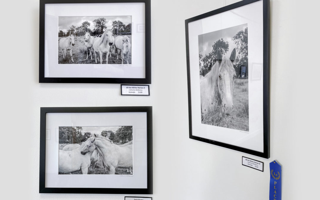 First Place – Photography Only Show